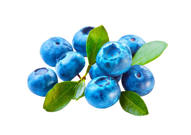 Blueberries-Resized-for-Website1